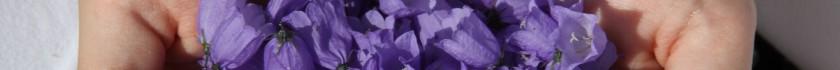 Klokkeblomster kan spises og bruges i madlavning. Friske og tørret. Det er flot og farverigt.